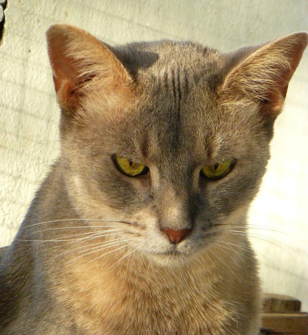 chat serieux Corbeil-Essonnes